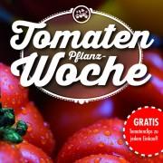 Tomaten-01