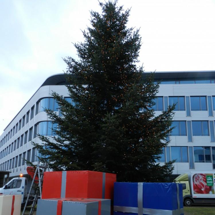 Weihnachtsbaum 2013 MAN 140